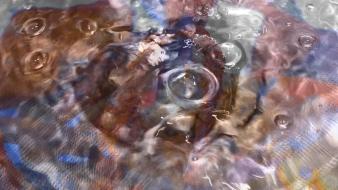 fragment tap 2.00_00_03_14.still001